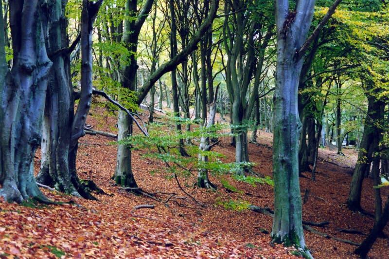 Download Starożytny las obraz stock. Obraz złożonej z strajki, jesienny - 35695