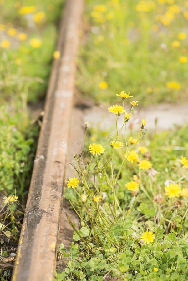 Download Staromodni kolejowi ślada zdjęcie stock. Obraz złożonej z powierzchowność - 28950130