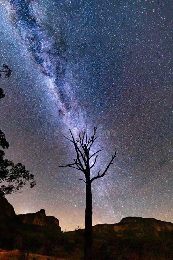 Starry night skies över trädgårdar av Stone och ensam träd arkivfoto