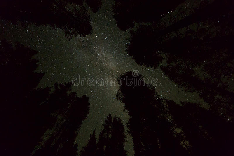 Starry night sky with milky way galaxy and trees silhouettes royalty free stock images