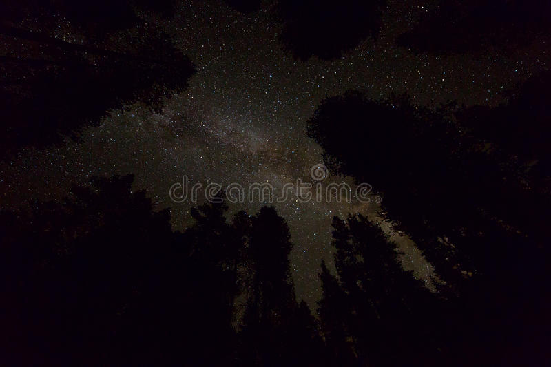 Starry night sky with milky way galaxy and trees silhouettes stock photos