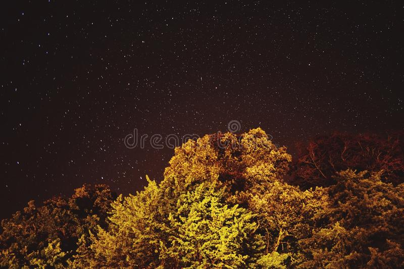 Starry night royalty free stock photo