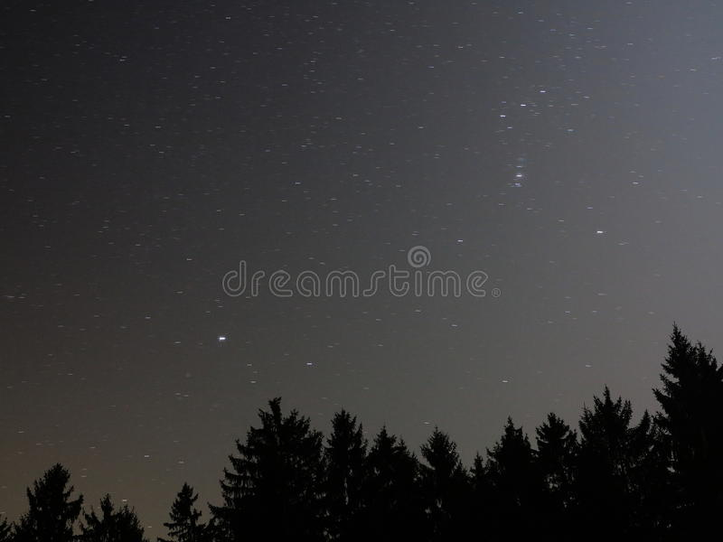 Starry sky above fir forest night scene royalty free stock photography