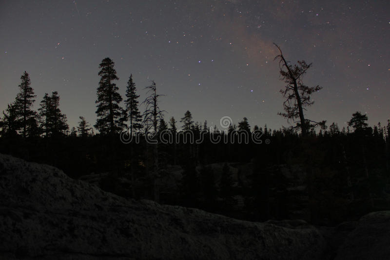 Starry sky above a forest stock photo
