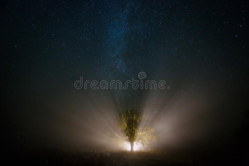 Starry sky and magical tree lit by torch. Milky way at night stock photo