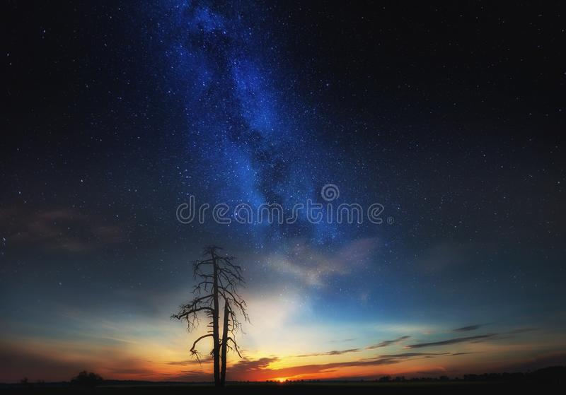 Starry sky over field and dead tree, fine art landscape stock photo