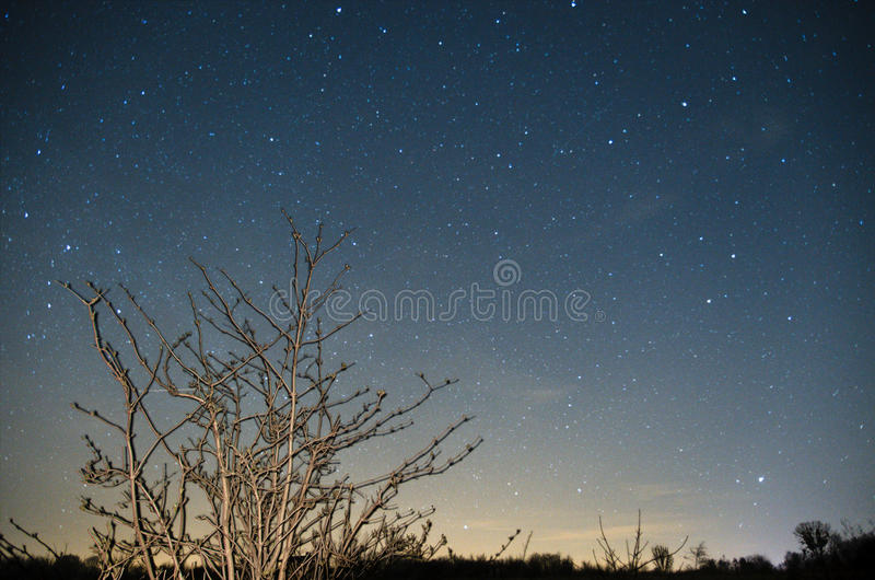 Starry sky over lonely tree stock photography
