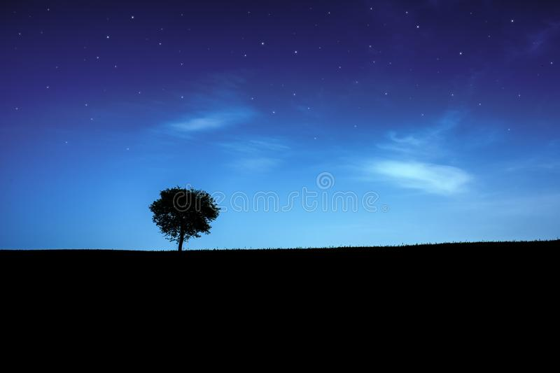 Starry sky over lonely tree silhouette.Night landscape. royalty free stock image