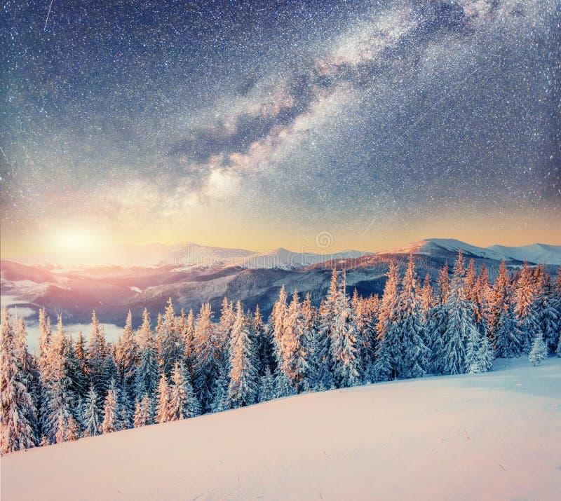 Starry sky in winter snowy night. Carpathians, Ukraine, Europe. Starry sky in winter snowy night. Carpathians Ukraine Europe royalty free stock photo