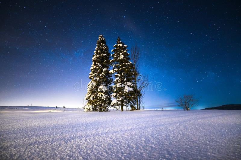 Starry winter night. Christmas trees on a snowy field under the starry winter sky. Magic Christmas night royalty free stock images
