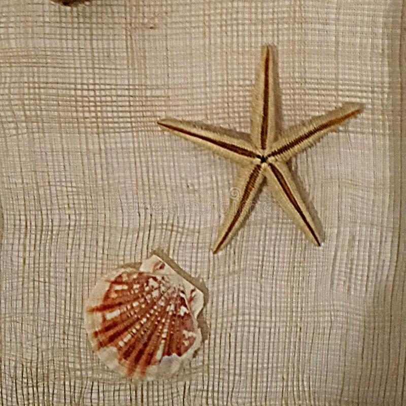 Memories of the sea. Stars and shells on a piece of net in Favignana island fisherman house royalty free stock images