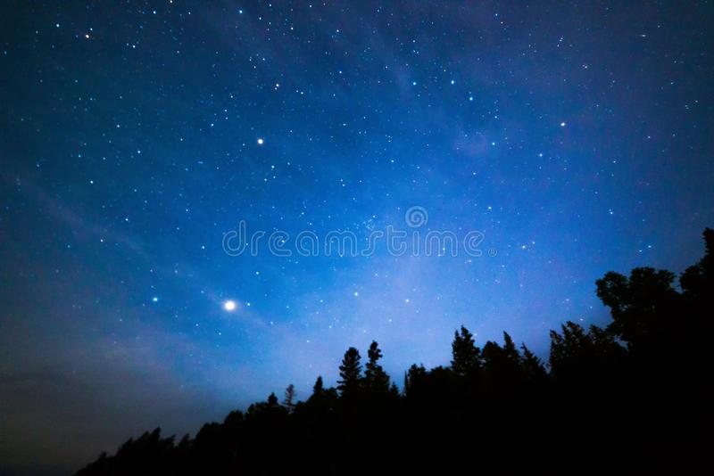 Stars over the trees at night stock images