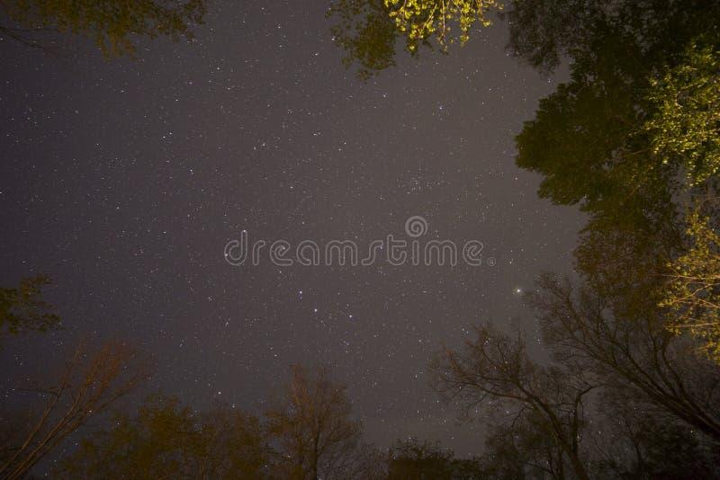 Stars Trees Night royalty free stock photography