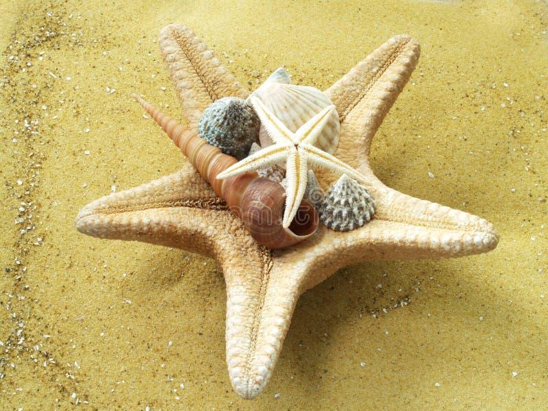 Starshells photos libres de droits