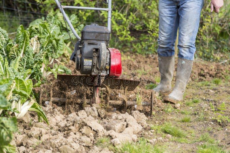 Starsza średniorolna ogrodniczka pracuje w ogródzie z rototiller, tiller ciągnik, cutivator, miiling maszyna fotografia royalty free