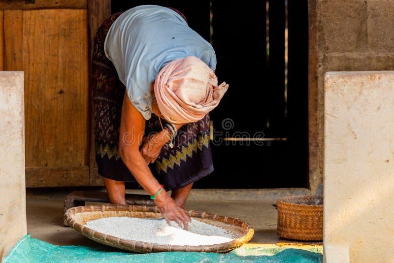Starsza dama sieving zboża Laos obraz royalty free