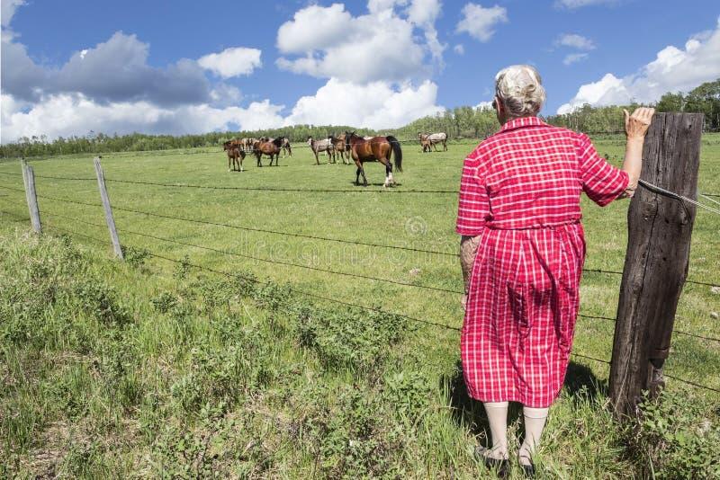 Starsza damy pozycja ogrodzeniem i dopatrywanie konie pasają, zdjęcie stock