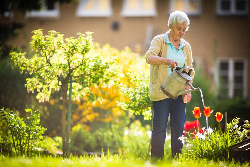 Starsza kobieta robi niektóre ogrodnictwu w jej uroczym ogródzie zdjęcia royalty free