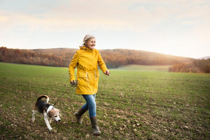 Starsza kobieta z psem na spacerze w jesieni naturze zdjęcia royalty free