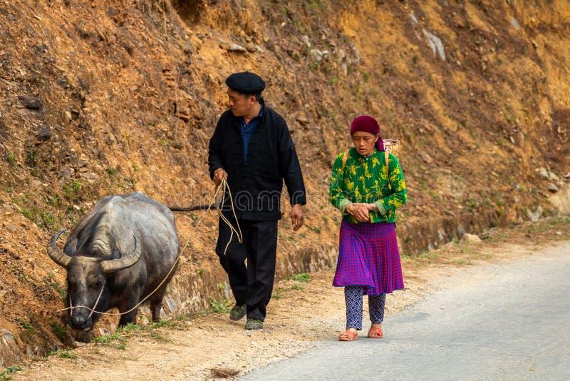 Starsza para chodzi bawoliego Wietnam zdjęcie stock