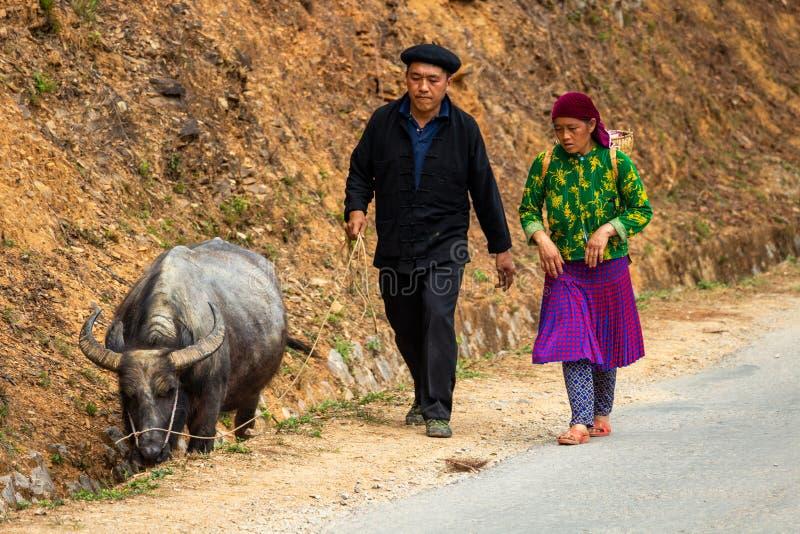 Starsza para chodzi bawoliego Wietnam zdjęcie royalty free