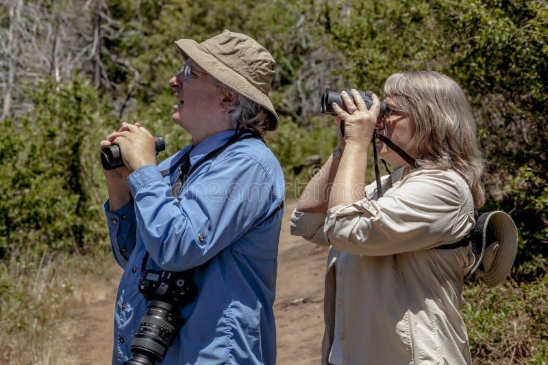 Starsza para Wycieczkuje i Birdwatching w drewnach na słonecznym dniu zdjęcie royalty free
