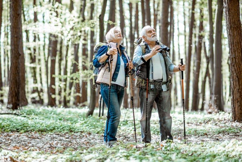 Starsza para wycieczkuje w lesie zdjęcia stock
