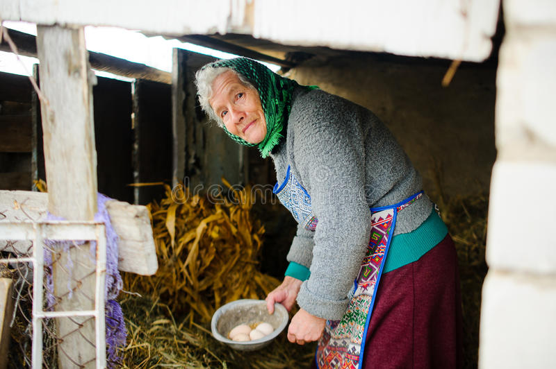 Starsza rodaczka zbiera jajka w kurnym domu zdjęcie stock