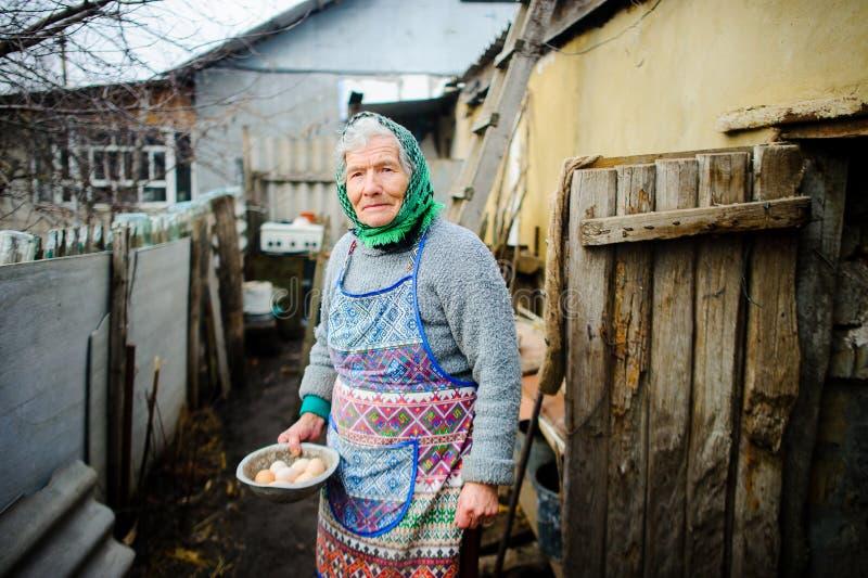 Starsza rodaczka zbiera jajka w kurnym domu obraz royalty free