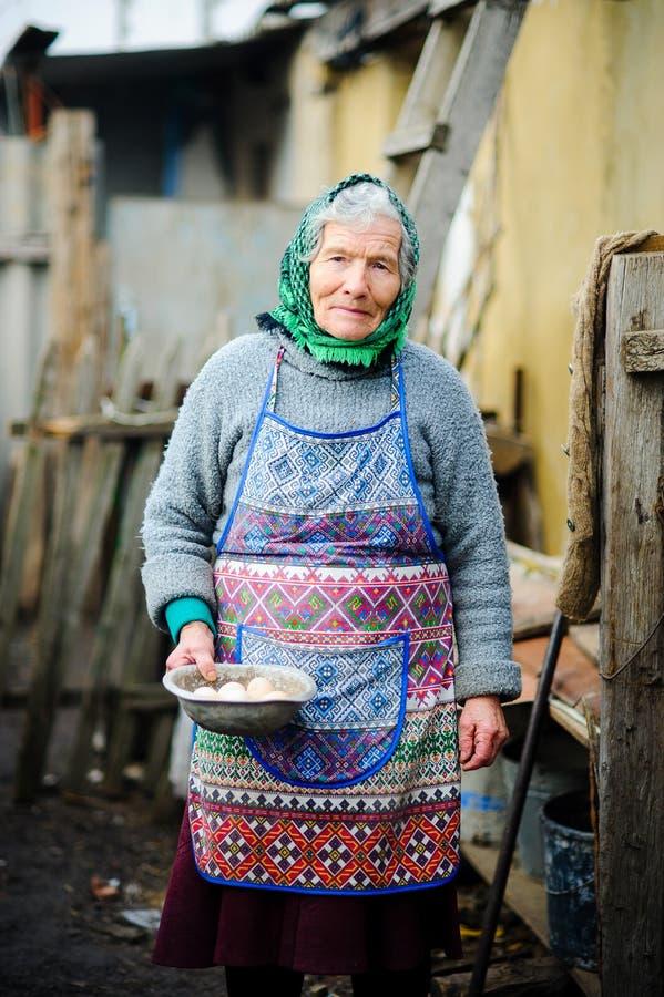Starsza rodaczka zbiera jajka w kurnym domu obrazy stock