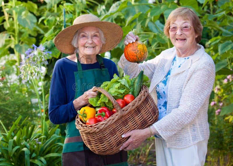 Starsze kobiety Pokazuje Rolnych warzywa w koszu obrazy royalty free