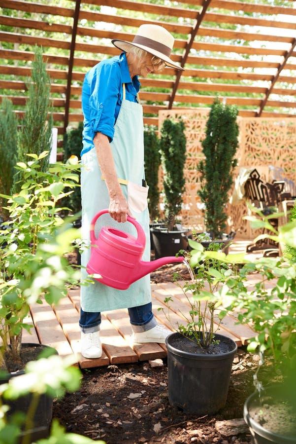 Starsze ogrodniczki podlewania rośliny fotografia royalty free