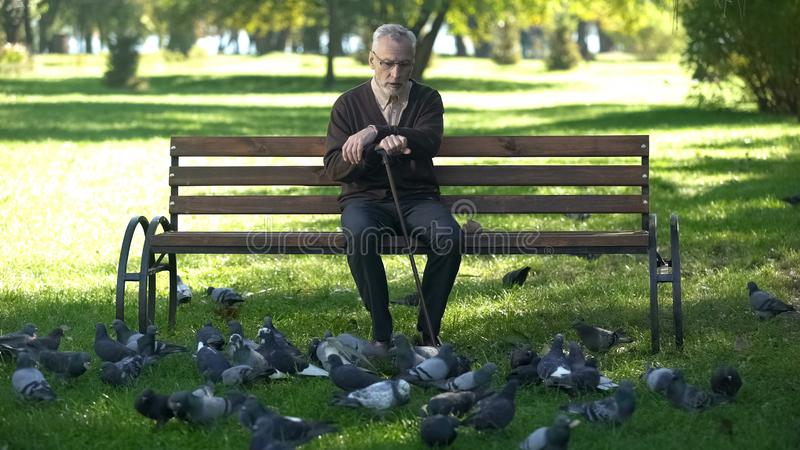 Starsze osoby obsługują relaksować patrzejący kierdla gołębie w parku, szczęśliwa emerytura obrazy stock