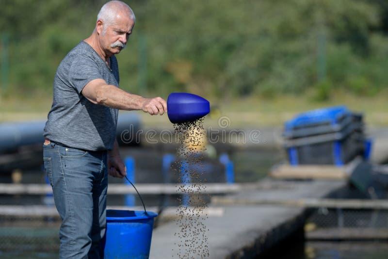 Starsze pracownika karmienia ryby obraz royalty free