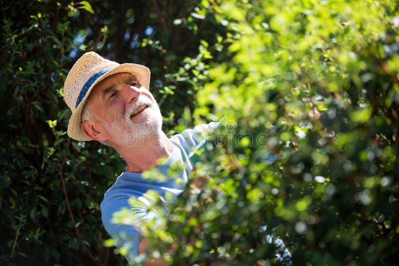 Starszego mężczyzna arymażu rośliny z przycinać strzyżenia obrazy stock