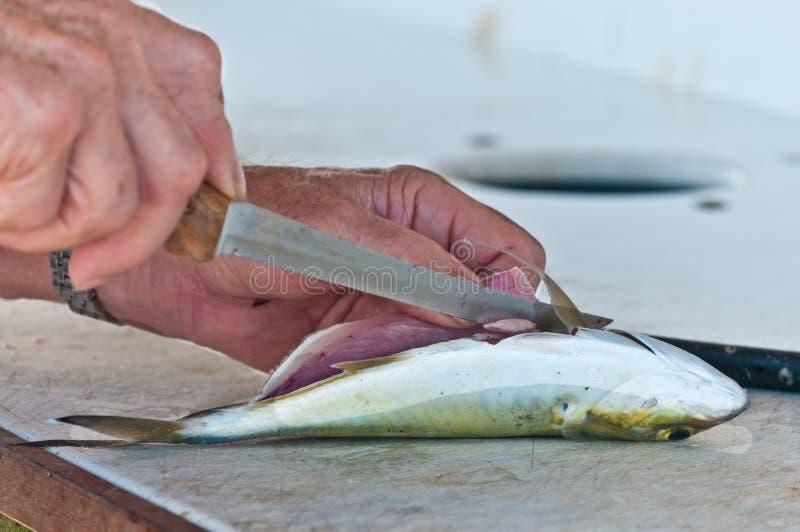 Starszego mężczyzna cleaning, łapiąca ryba zdjęcie stock