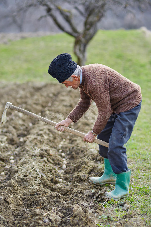 Starszego mężczyzna wysiewne grule obrazy stock