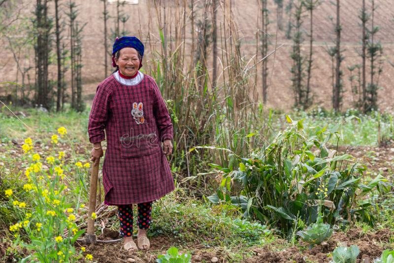 Starszy żeński rolniczy pracownik Wietnam fotografia stock