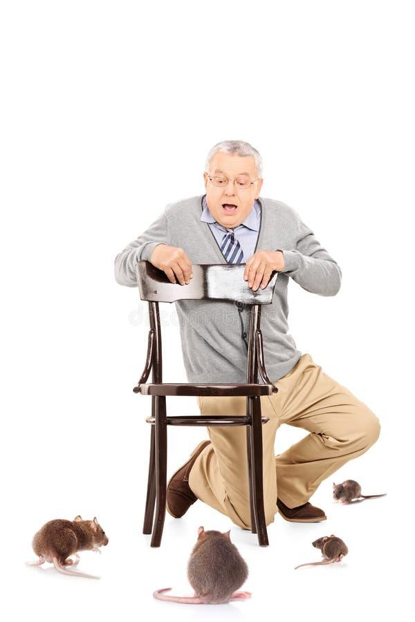 Starszy dżentelmen atakujący szczurami zdjęcia stock