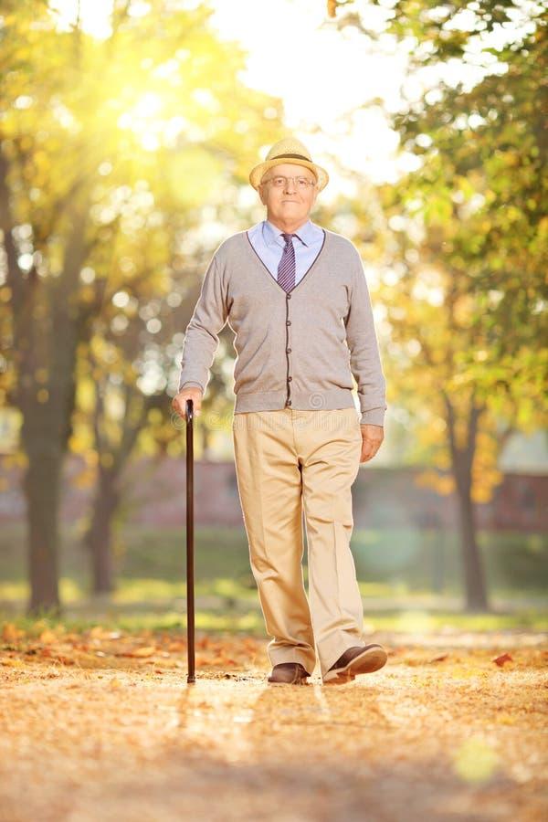 Starszy dżentelmenu odprowadzenie w parku na słonecznym dniu w jesieni, zdjęcie stock