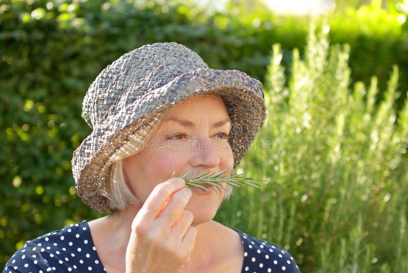 Starszy kobieta ogródu rozmarynów perfumowanie obraz royalty free