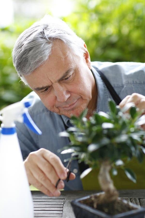 Starszy mężczyzna bierze opiekę rośliny zdjęcia stock