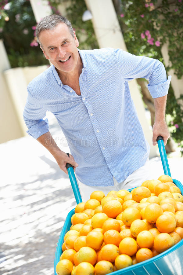 Starszy Mężczyzna Dosunięcia Wheelbarrow Wypełniający Z Pomarańczami fotografia royalty free