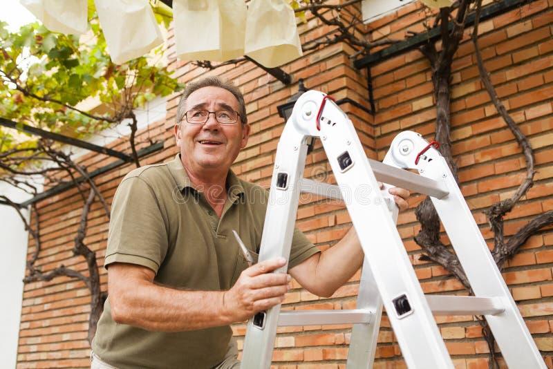 Starszy mężczyzna wspina się drabinę Ogród pracy fotografia royalty free