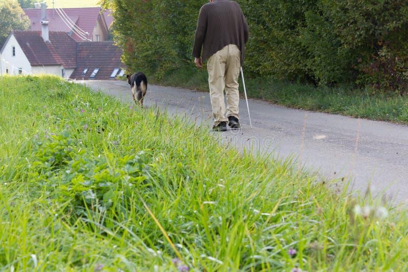 starszy mężczyzna z chodzącym kijem beside i niemieckim pasterskim psem zdjęcie stock