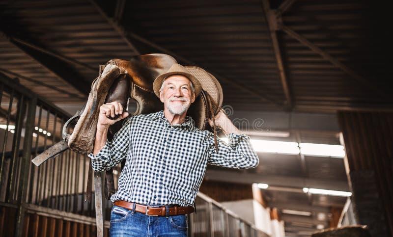 Starszy mężczyzna z kapeluszowym przewożeniem koński comber na jego brać na swoje barki w stajence zdjęcie stock