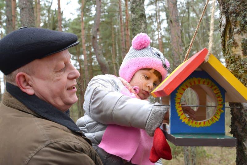 Starszy mężczyzna z wnuczką stawiającą groszkuje w ptak opłacie fotografia royalty free