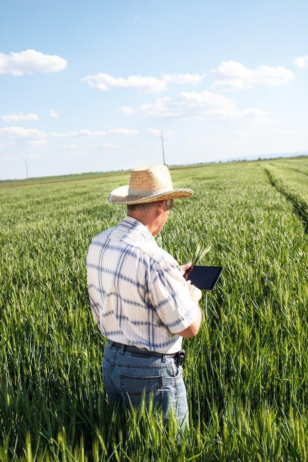 Starszy rolnik zdjęcia stock