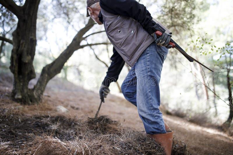 Download Starszy rolnik przy lasem obraz stock. Obraz złożonej z rolnictwo - 106916407