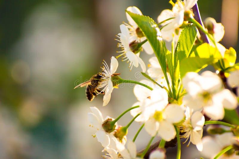 Starten av honungen arkivbilder